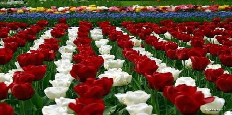 Esenyurt Çiçekçilik