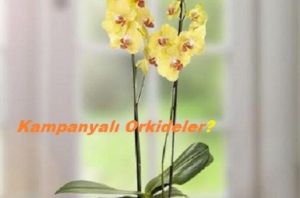 Efsane orkide çiçek esenyurt orkide siparişi