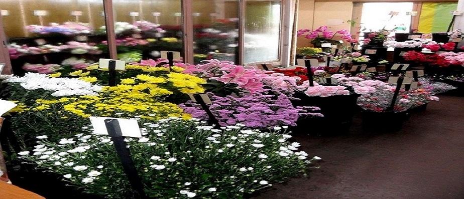 Esenyurt Çiçekçileri
