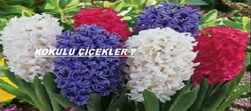 Kokulu çiçek