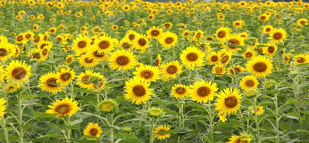 taze çiçek